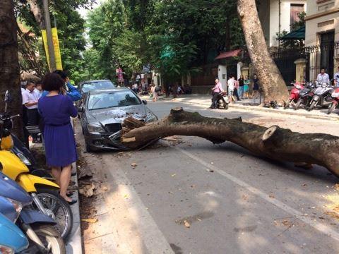 """Không mưa bão, cây cổ thụ bất ngờ đổ trúng """"xế hộp"""", tài xế suýt chết - 1"""
