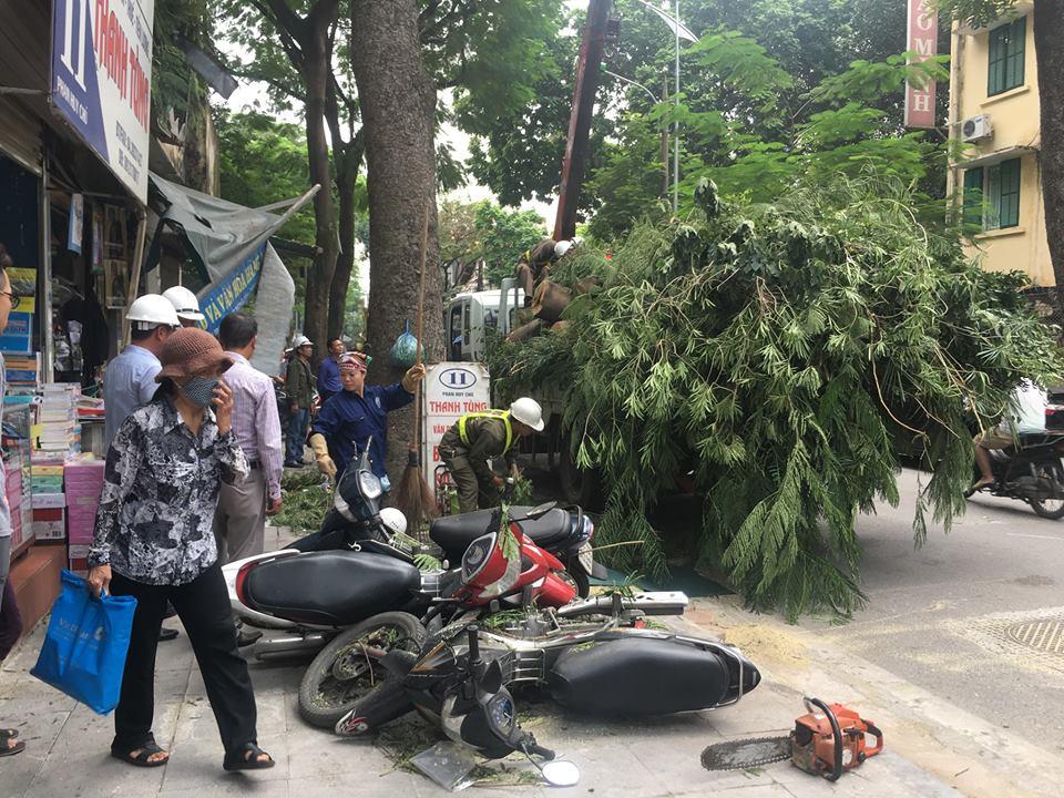 """Không mưa bão, cây cổ thụ bất ngờ đổ trúng """"xế hộp"""", tài xế suýt chết - 5"""