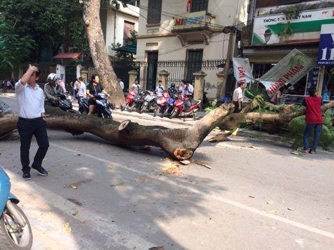 """Không mưa bão, cây cổ thụ bất ngờ đổ trúng """"xế hộp"""", tài xế suýt chết - 2"""