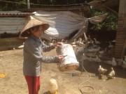 Thị trường - Tiêu dùng - Cho ngan, gà chung 1 nhà, lãi hơn 200 triệu/năm