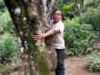 """Nông dân làm giàu: Có tiền tiêu đều đều từ 300 gốc cây """"bất tử"""""""