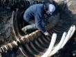 Xác thủy quái khổng lồ không đầu dạt vào bờ biển Nga