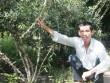 Cao thủ nhân giống thành công cây xáo tam phân, bán 2 triệu/cây