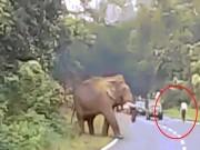 Hãi hùng cảnh voi dữ khổng lồ giẫm chết người ở Ấn Độ