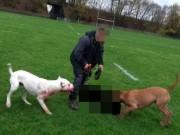 Thế giới - Hai chó ngao cắn xé chó săn thỏ đến chết ở Anh