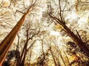 Du lịch - Ngắm rừng săng lẻ nguyên sinh đẹp như tranh giữa đại ngàn xứ Nghệ