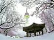 Thiên đường trượt tuyết ấn tượng tại Hàn Quốc