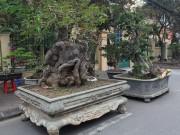 """"""" Kỳ hoa dị thảo """"  dồn dập đổ về Hà Nội, dân chơi cây cảnh phát sốt"""