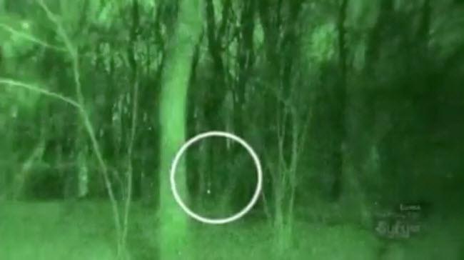 Những bí ẩn rợn người trong khu rừng ma ám đáng sợ nhất thế giới - 4