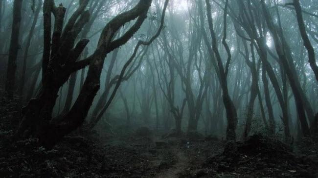 Những bí ẩn rợn người trong khu rừng ma ám đáng sợ nhất thế giới - 5