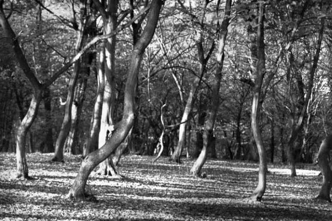 Những bí ẩn rợn người trong khu rừng ma ám đáng sợ nhất thế giới - 3