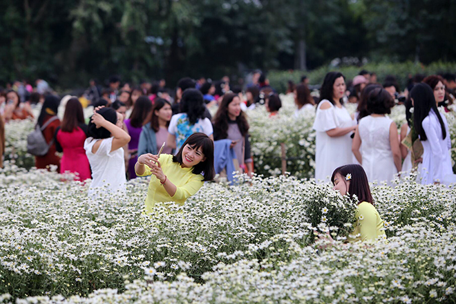 Những địa điểm chụp ảnh cúc hoạ mi đẹp tinh khôi không thể bỏ lỡ ở Hà Nội - 4