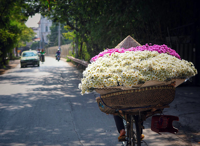 Những địa điểm chụp ảnh cúc hoạ mi đẹp tinh khôi không thể bỏ lỡ ở Hà Nội - 6