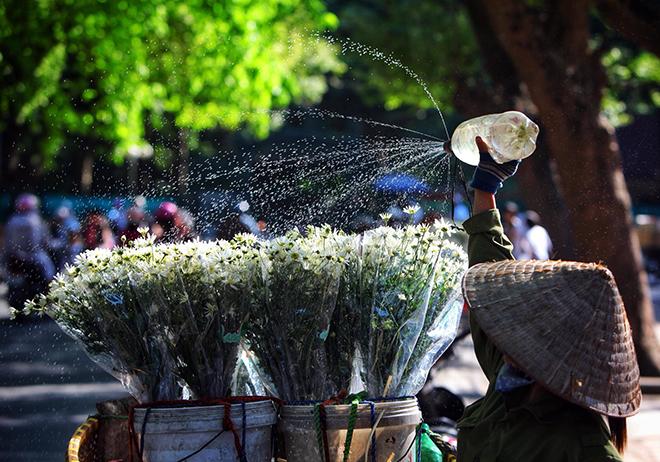 Những địa điểm chụp ảnh cúc hoạ mi đẹp tinh khôi không thể bỏ lỡ ở Hà Nội - 8