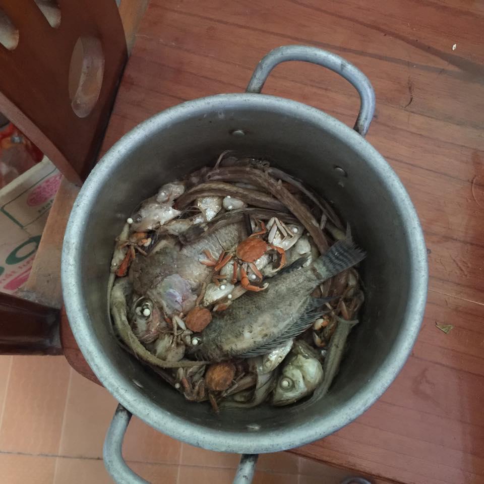 """Bà bầu gây """"sốc"""" với mâm cơm đầy đủ tôm, cá giá chỉ... 5.000 đồng - 5"""