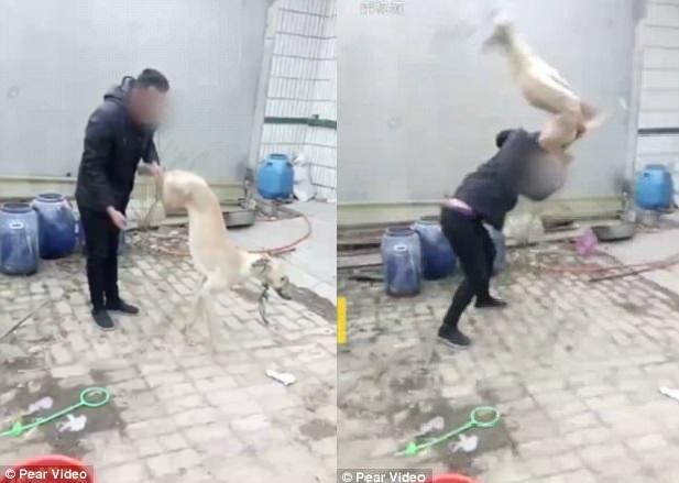 Chủ giết chó theo cách dã man gây phẫn nộ ở Trung Quốc - 1