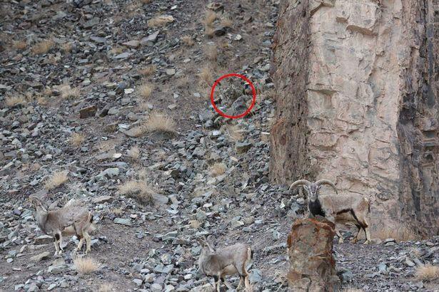 Bức ảnh cho thấy tài ngụy trang bậc thầy của báo dữ - 2