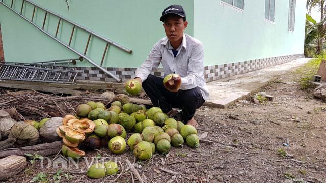 Dừa độc, lạ đón Tết 2018 của 'vua' tạo hình trái cây bị rụng la liệt - 1
