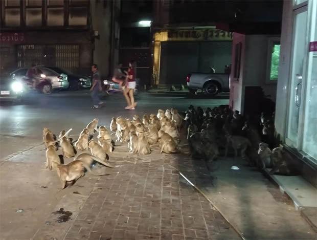 Hết hồn cảnh trăm con khỉ chạy như bay qua đường - 1
