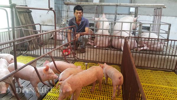 Giá lợn hơi đang tăng nhẹ, cả nước ngóng vụ tết - 1