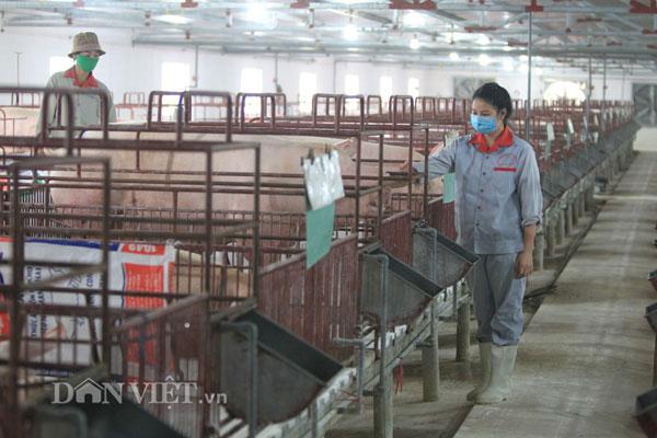 Giá lợn hơi đang tăng nhẹ, cả nước ngóng vụ tết - 2