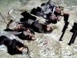 Tạm giam hai đối tượng săn bắn Voọc chà vá chân đen