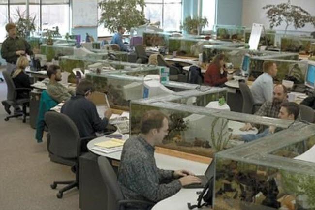Những văn phòng làm việc kỳ dị khắp thế giới - 4