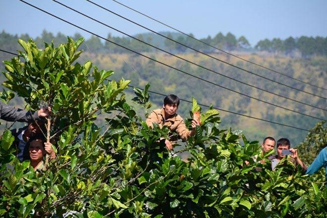 Hàng nghìn người bỏ hái cà phê đi xem dựng lại hiện trường vụ giết người - 6