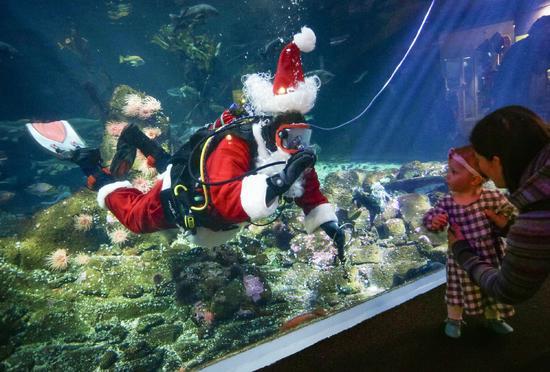 Canada: Hút khách bằng ông già Noel trong bể cá - 2