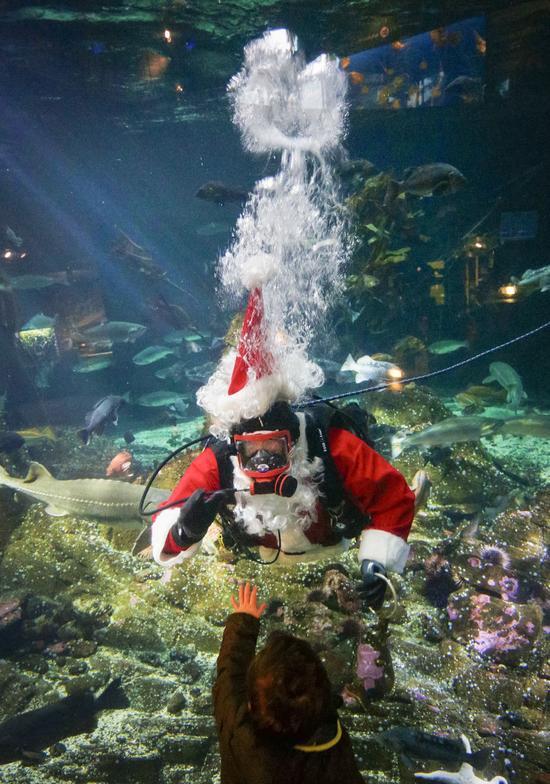 Canada: Hút khách bằng ông già Noel trong bể cá - 3