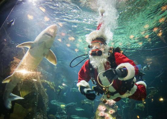 Canada: Hút khách bằng ông già Noel trong bể cá - 4