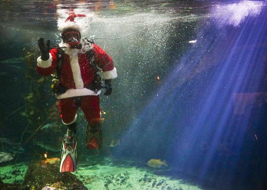 Canada: Hút khách bằng ông già Noel trong bể cá - 6