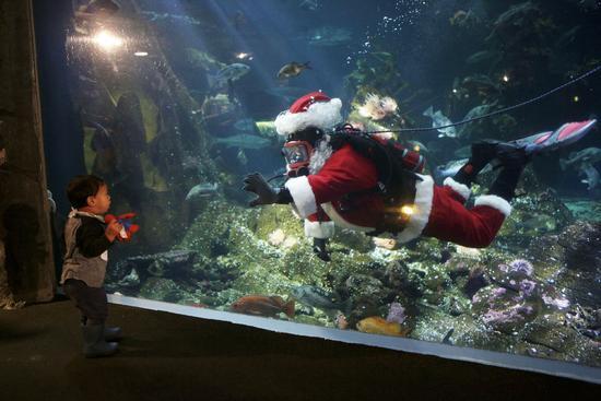 Canada: Hút khách bằng ông già Noel trong bể cá - 5