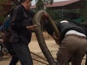 Người dân vây bắt rắn  khủng  nặng gần 20kg ở Vĩnh Phúc
