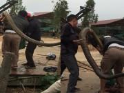Thông tin mới vụ người dân bắt được rắn  khủng  ở Vĩnh Phúc