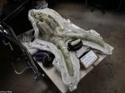 Mỹ: Tìm ra hóa thạch voi ma mút  khủng  vạn năm tuổi