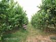 Trồng cây gì bán Tết: Chăm cây dại, dân Thủ đô bất ngờ kiếm cả tỷ đồng