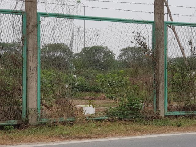 Tin tức trong ngày - Dân phá rào vào trồng cây trên Đại lộ Thăng Long