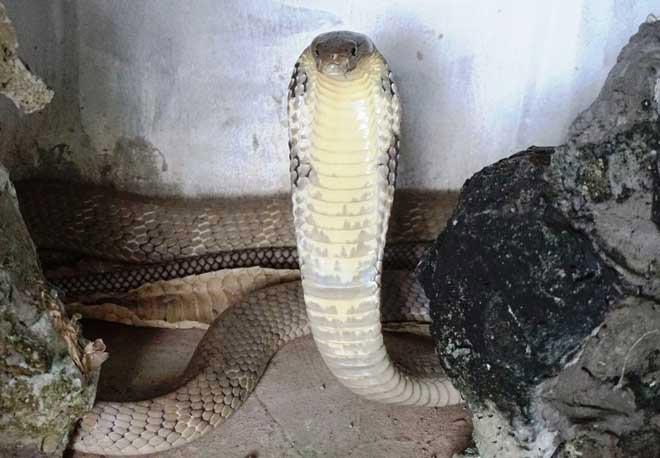 Rùng mình xem lại cảnh người dân vây bắt những con rắn khổng lồ - 4