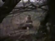 Nữ hoàng hổ  sống 2 thập kỷ, giết chết cá sấu khổng lồ 4,3 mét