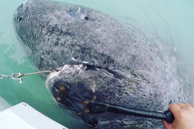 Phát hiện cá mập quái vật sống hơn 5 thế kỉ, thọ nhất thế giới - 1