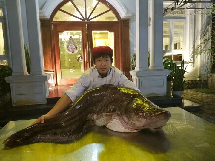 """Cá leo khổng lồ, dài gần 1,7m """"bay"""" từ nước ngoài về Hưng Yên - 5"""