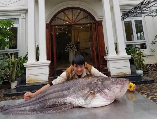 """Cá leo khổng lồ, dài gần 1,7m """"bay"""" từ nước ngoài về Hưng Yên - 1"""