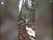 Clip cô gái mạo hiểm tập yoga trên cây cầu gỗ bắc qua suối