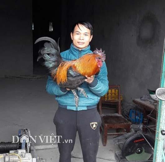 Chàng trai Nùng ăn nên làm ra nhờ 2.000 gà Mông đặc sản - 4