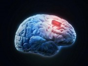Chip não có thể giúp con người  thần giao cách cảm