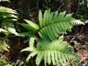 Bí mật về một loại cây quý ở Việt Nam hỗ trợ trị tiểu đêm - Phòng nguy cơ suy thận