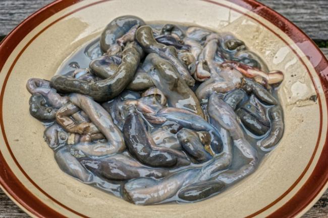 3.Tamilok: Đây là những con sâu sống trong thân cây đước. Sau khi lọc bỏ phần ruột thì chúng được tẩm ướp trong dấm hoặc nước cốt chanh, ớt và hành rồi ăn sống.