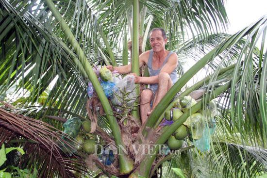Bỏ ăn, bỏ ngủ ngồi trên cây, U60 'nặn' dừa hồ lô lạ mắt bán Tết 2018 - 2