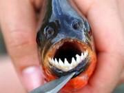 """"""" Điểm mặt """"  5 loài sinh vật ngoại lai gây mối nguy cao"""